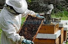 apicultori 2